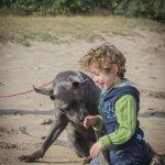 Jongen en Hond (Springstal 't Bergse Bos)